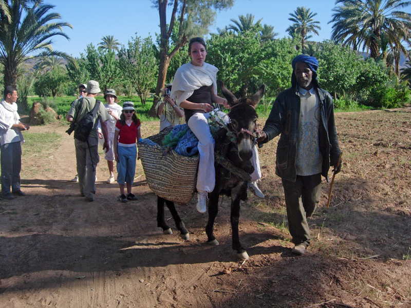 Donkey ride in the Agdz palm grove