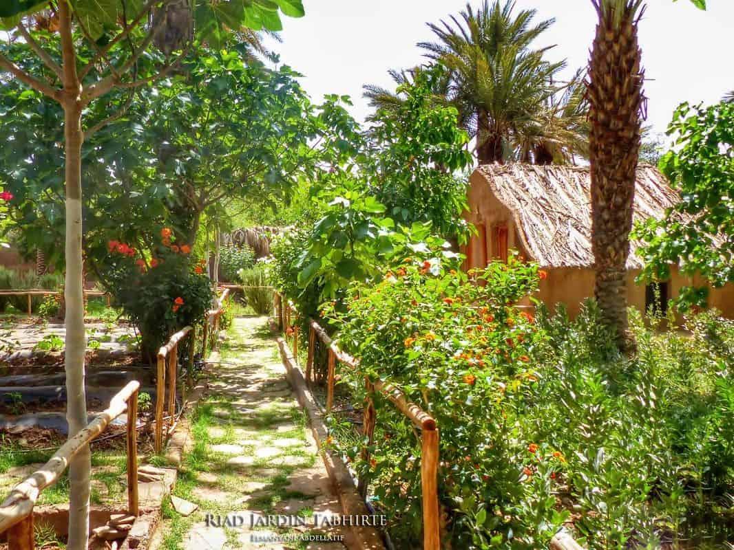Organic vegetable garden Agdz